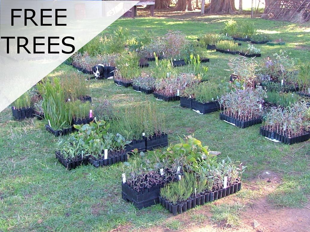 freetrees_2005-copy
