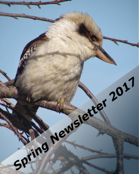 spring newsletter cover photo